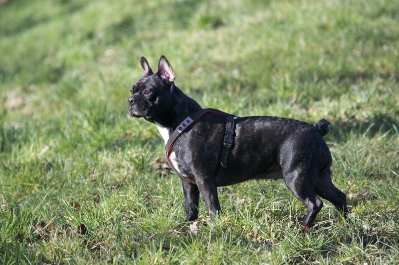 Listenhunde Nothilfe