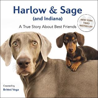 harlow_sage