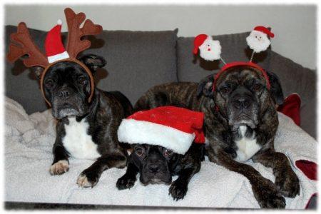 weihnachten_2015_trio_klein
